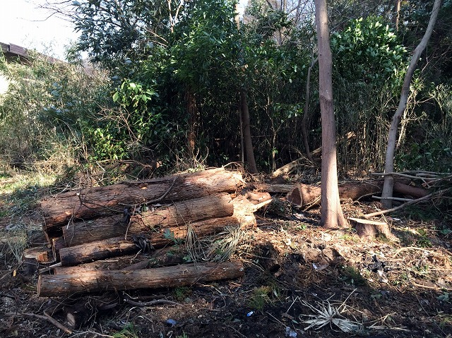 投資物件の倒木撤去